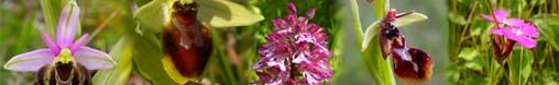 montage flore